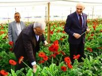 KIRMIZI GÜL - Antalya'da Çiçek Mezatı