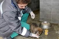 Çankaya Binlerce Sokak Hayvanına Dokundu