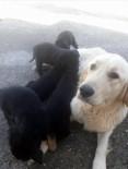 YAVRU KÖPEK - Köpekler Dev Dalgalar Arasında Telef Oldu