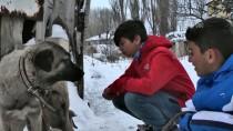YAVRU KÖPEKLER - Miniklerden Sahipsiz Köpek Ve Yavrularına Şefkat Eli