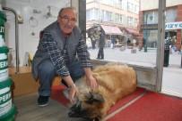 Sokak Köpeğine 3 Yıldır Dükkanında Bakıyor