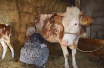 MAKINE MÜHENDISI - TİKA'nın Kosova Tarımsal Kalkınma Programı Amacına Ulaştı