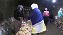Patatesler Soğuk Hava Depoları Yerine Mağaralarda Saklanıyor