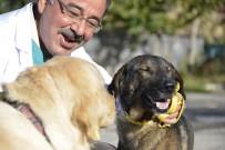 HAYVAN BAKIM EVİ - Yaralı Köpekler Sağlığına Kavuştu