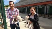 YAVRU KÖPEKLER - Hayvansever Çiftten Sahiplenme Çağrısı