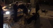 SOKAK KÖPEKLERİ - Kars Polisi Örnek Davranış