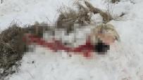 AKMESCIT - Aç Kalan Kurtlar, Köpeği Yedi