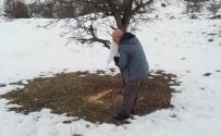 ALI HAYDAR - Tunceli'de Yaban Hayvanları İçin Yem Desteği