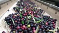 KALORIFER YAKıTı - Alternatif Yakıt Olarak Zeytin Çekirdeğine Talep Artıyor