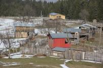 NIHAT ÖZDEMIR - Artvin'de Ayılar Aç Kalınca Yayla Evlerine Saldırdı