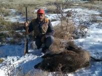 YABAN DOMUZU - Karaman'da Yaban Domuzlarına Sürek Avı