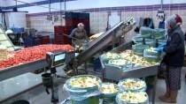 İMALATHANE - 'Turşucu Köy'den Günde 10 Tır Ürün Çıkıyor