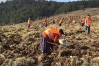BOZARMUT - Yaban Hayvanları İçin 11 Bin Fidan Dikildi