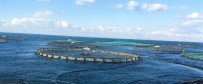 MORDOĞAN - Karadağ'da Balıkçılık Sektörüne TİKA Desteği