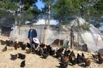 KUŞ BAKıŞı - Son Maaşı İle 100 Tavuk Alıp Çiftlik Kurdu, Talebe Yetişemiyor