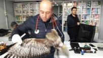 ORMAN MÜDÜRLÜĞÜ - Yaralı Olarak Bulunan Puhu Kuşu Tedavi Altına Alındı
