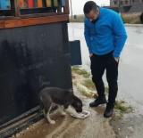 ALTINŞEHİR - Aç Kalan Sokak Köpeklerini Kavurma İle Doyurdu Battaniye İle Isıttılar
