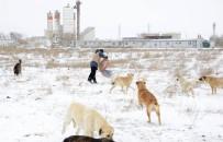 SIĞIRCIK - Konya'da Kuşlara Ve Sahipsiz Hayvanlara Yem Bırakılıyor