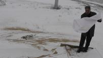 MUSTAFA ERDOĞAN - Kulu'da Aç Kalan Hayvanlar İçin Doğaya Yem Bırakıldı