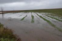 AŞIRI YAĞIŞ - Yağmur Duasına Çıkılan İlçede Tarım Arazileri Sular Altında Kaldı