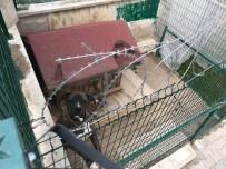 HACı MURAT - Köpek Yüzünden İki Kişiyi Öldüren Adamın Ailesi O Evden Taşındı