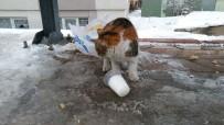 HAYVAN SEVERLER - Aç Kalan Kedi Donmuş Sütle Karnını Doyurmaya Çalıştı