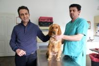 SOKAK HAYVANI - Sokak Hayvanlarına Sıcak Yuvanın Adresi Tepebaşı Belediyesi Oldu