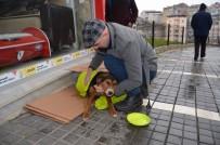 MOBİLYA MAĞAZASI - Üşüyen Köpeği Battaniyeye Sarıp Süt Verdiler