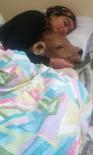 YAĞCıLAR - Bu Kez Hasta Buzağısı İle Birlikte Uyuduğu Fotoğrafı Büyük Beğeni Topladı