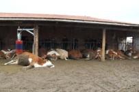 YıLMAZ KAYA - Elektrik Akımına Kapılan 14 Hayvan Telef Oldu