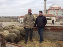 BİLAL ÖZCAN - Günyüzülü Genç Çiftçilere Koyunları Teslim Edildi