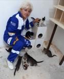 HAYVAN HAKLARı FEDERASYONU - Hayvanlara Karşı İşlenen Suçlar Kabahat Değil Suç Sayılmalı