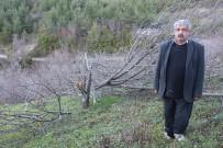 ÇAM FISTIĞI - 72 Meyve Ağacını Kestiler
