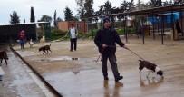 HAYVAN SEVERLER - Didim'de Hayırseverlerden Hayvan Barınağına Destek