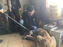 ARDAHAN BELEDIYESI - İpe Bağlı Olarak Sokağa Terk Edilen Köpek Barınakta Tedavi Edildi