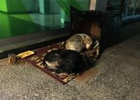 NURSULTAN NAZARBAYEV - Banka Önünde Sokak Köpekleri İçin Sıcak Yuva