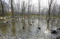 YABAN ÖRDEĞİ - Avrupa'nın En Büyük Doğal Yaşam Parkı Kocaeli'de