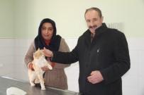 MEHMET ÇALıŞKAN - Duyarlı Çift, Donmak Üzere Olan Kediye Sahip Çıktı