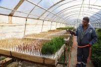 SARMAŞıK - Kepez 2017'De 100 Bin Süs Bitkisi Üretti
