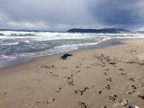 KADIN CESEDİ - Kıyıya Kimliksiz Kadın Cesedi Vurdu