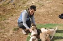 HAYVAN SEVGİSİ - Şırnak'ta Görev Yapan Doktor Kendi İmkanlarıyla Sokak Hayvanlarına Bakıyor