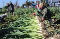 YIPRANMA PAYI - TZOB Kadın Çiftçilere Yıpranma Payı İstedi