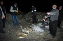YAVRU KÖPEKLER - Yavru Köpekler, Birbirine Bağlanıp Öldürülmüş