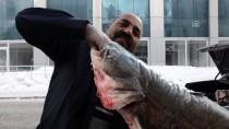 İLGİNÇ GÖRÜNTÜ - Yayın Balıkları Pazarlık Usulü Satılıyor