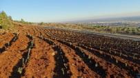ORMAN İŞLETME MÜDÜRÜ - Resul Osman Mesire Alanında Lavanta Ormanı Kuruluyor