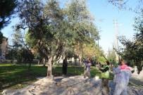 Toplanan Zeytinler Muhtacın Sofrasında
