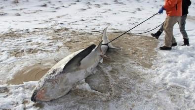 ABD'de köpek balıkları dondu