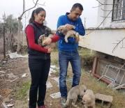 YAVRU KÖPEKLER - Annelerinin Terk Ettiği 8 Yavru Köpeğe Yuva Oldular