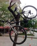 Bisikleti Ağaca Astı
