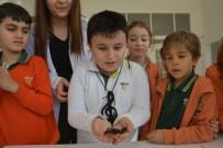 KÜRESEL ISINMA - Çocuklar Böceklerle Tanıştı